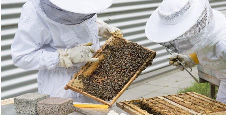 L'apiculture urbaine, une tendance dans les grandes villes en France