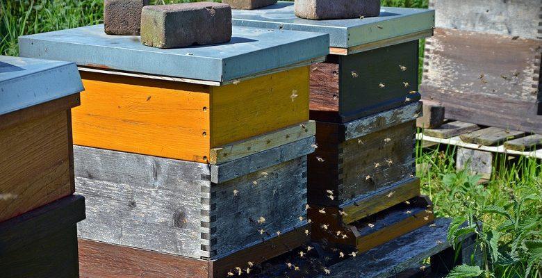 Les abeilles, un facteur de bien-être dans les entreprises françaises